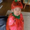 イチゴヤマト(3歳0ヶ月)